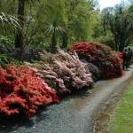 Achamore Gardens Isle of Gigha (28)