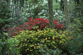 Arduaine Gardens